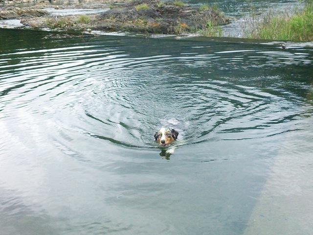 水飲みながら泳いでます