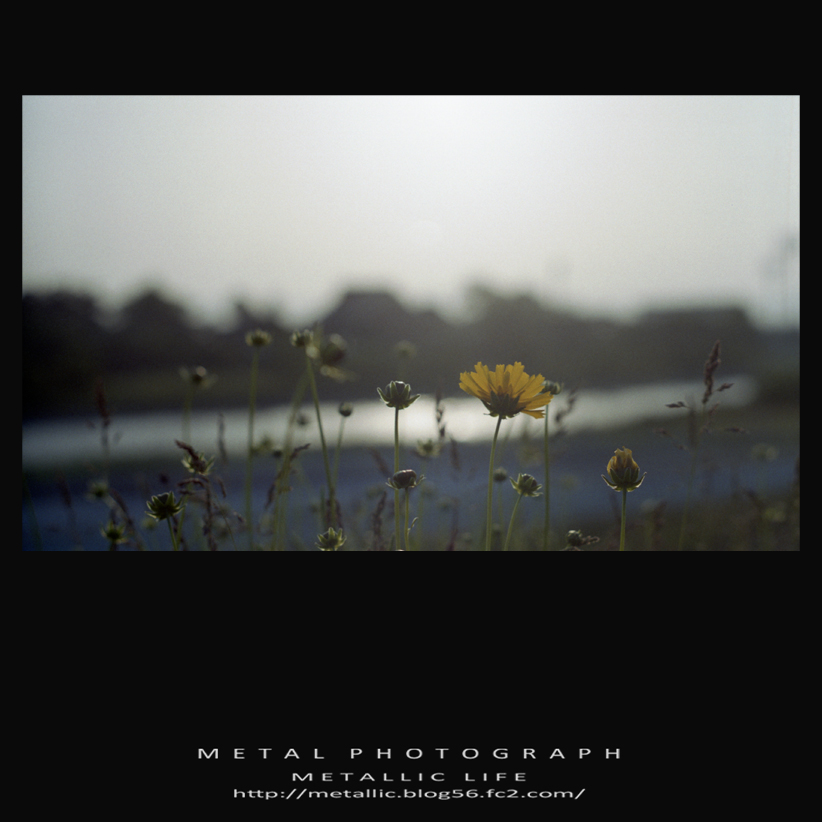 mlsv20140625-1
