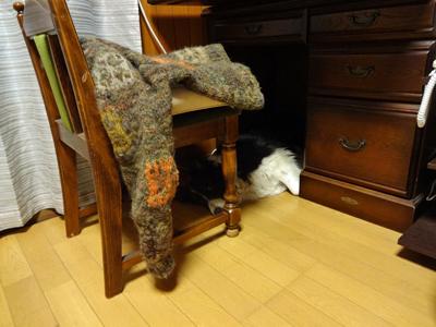 ヴィッキー机の下2