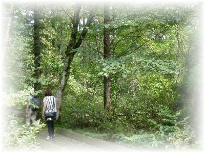 森林公園3