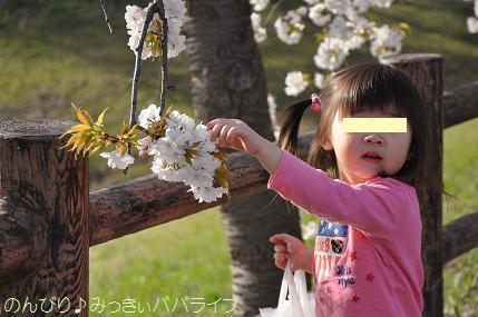 hanami201402.jpg