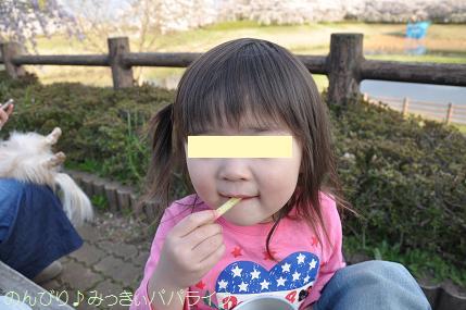 hanami201409.jpg