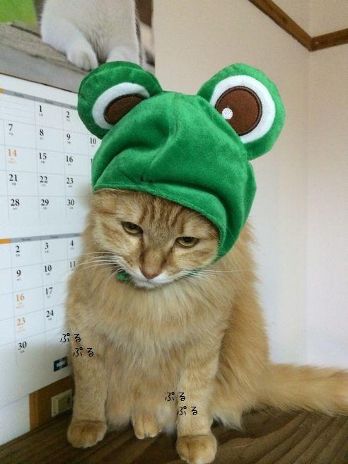 怒れるカエル