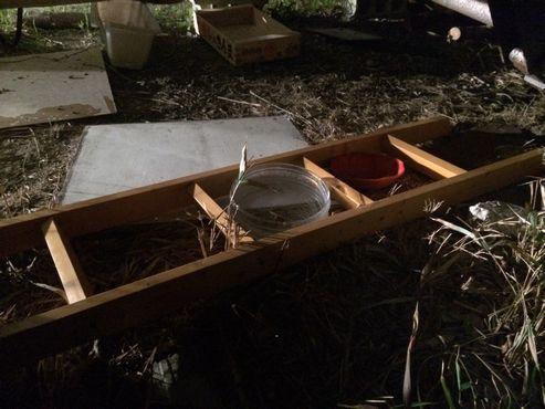 コンテナの下には水とご飯の容器