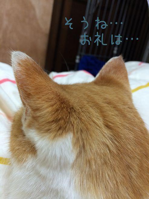 耳が特徴ww