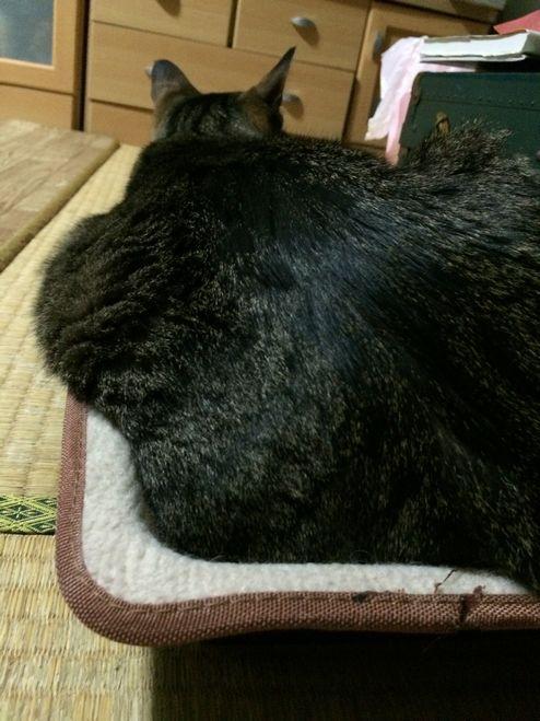 余分な体脂肪