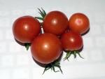 トマト140723