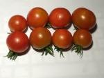 トマト140728