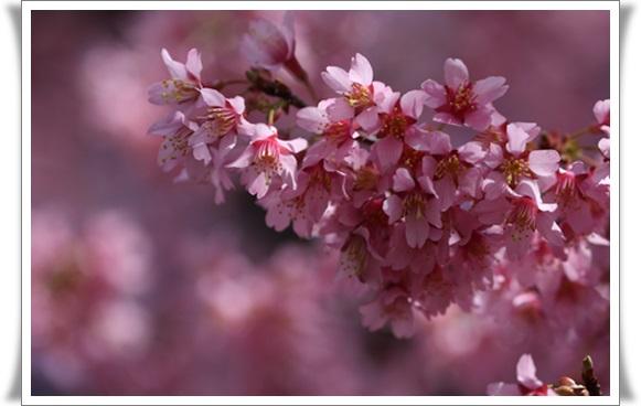 桜403216