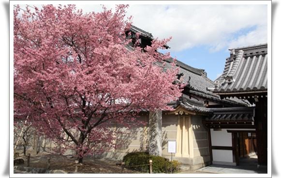 桜403215