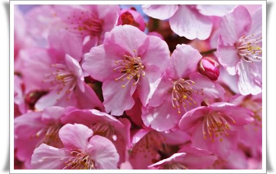 桜403212