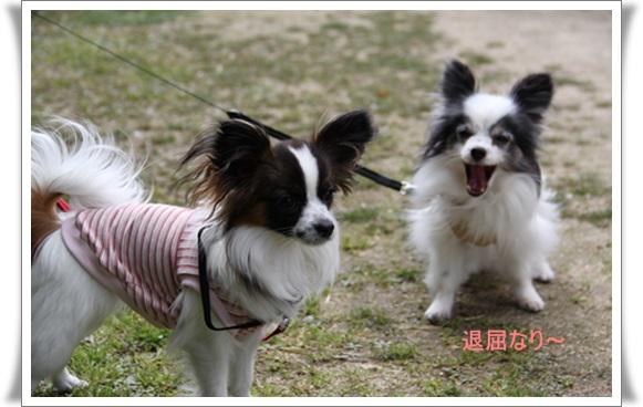 河津桜403228