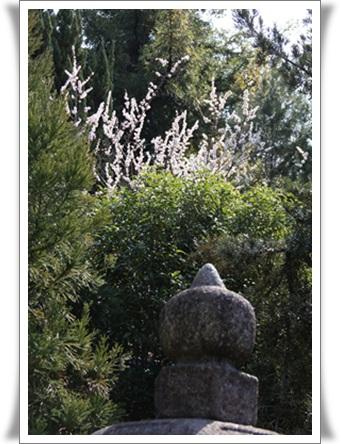 祇園4031610