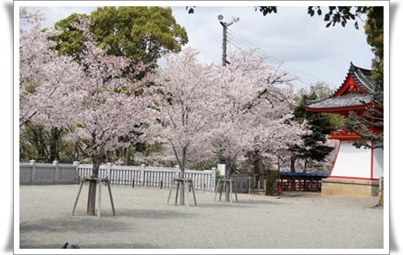 桜404086