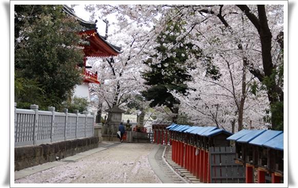 桜404081