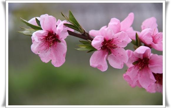 亀桜4040611