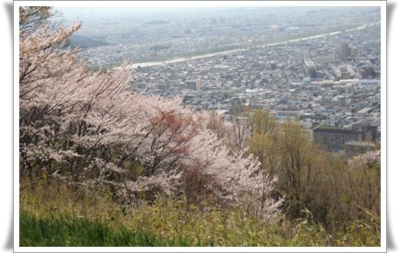 亀桜404061