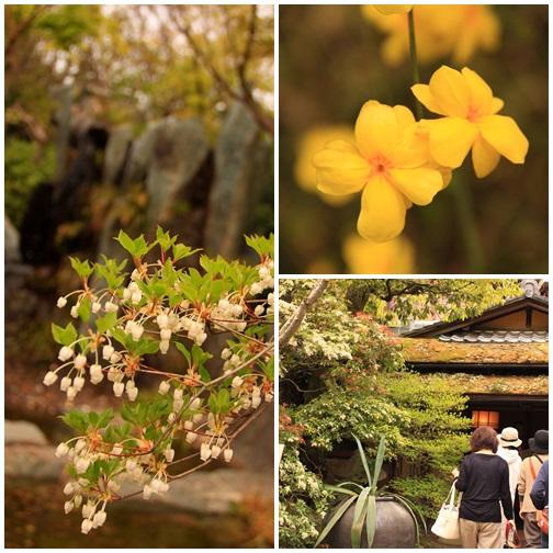 黄桜4041611