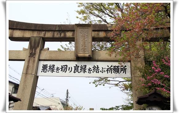 黄桜404164