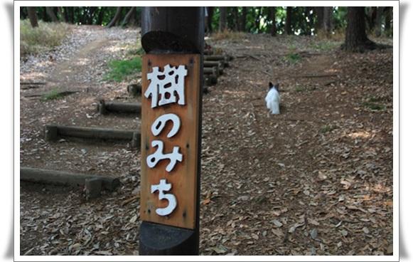 大泉公園406217