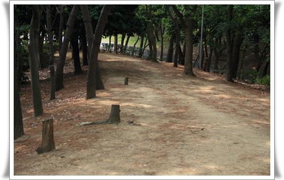 大泉公園406218