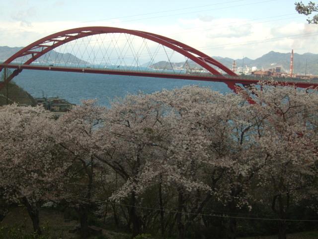 音戸の瀬戸公園の桜