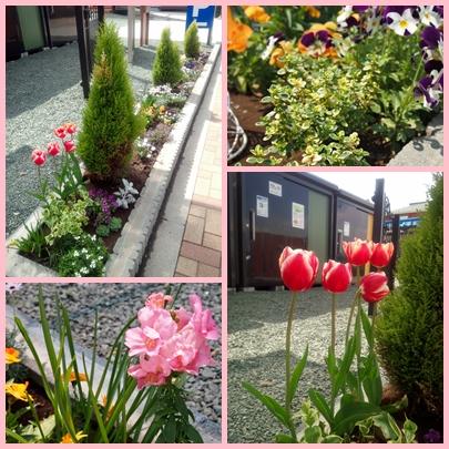 4月の花1