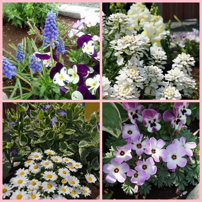4月の花3