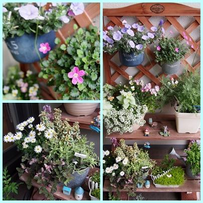 5月の花1