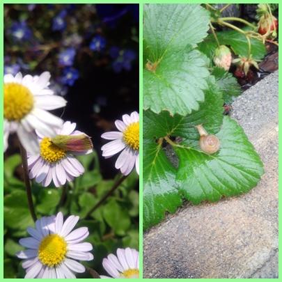 花壇の生き物