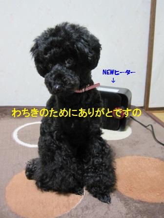 IMG_8078 (448x336)