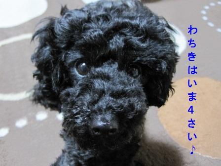 IMG_8707 (448x336)