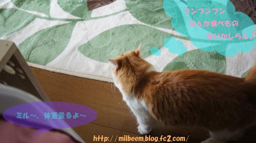 taisoku001_3.jpg