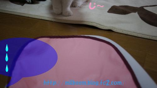 taisoku002_2.jpg