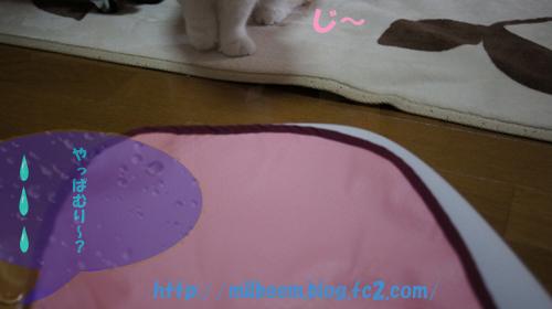 taisoku004_3.jpg