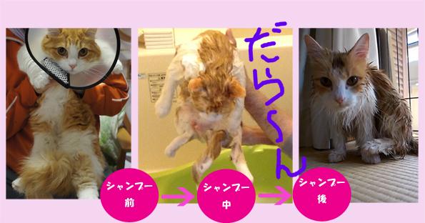 wash002_4.jpg