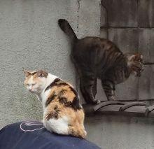 源覚寺・2匹のお猫様