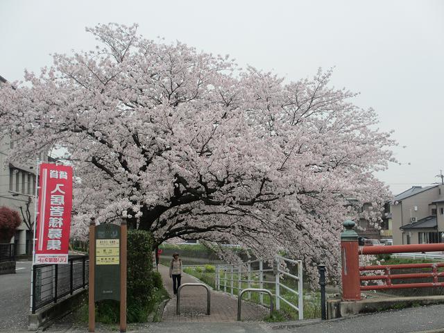 2014 桜5