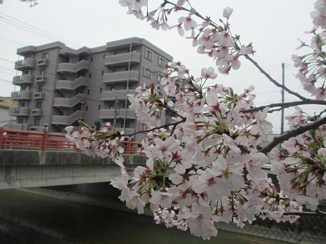 2014 桜6