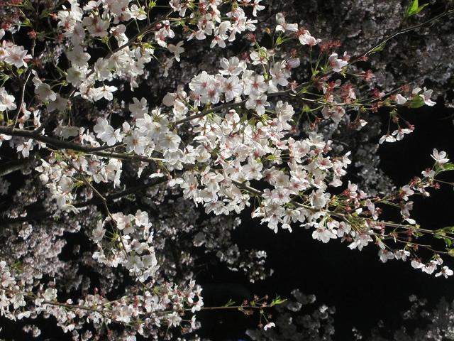 2014 夜桜8