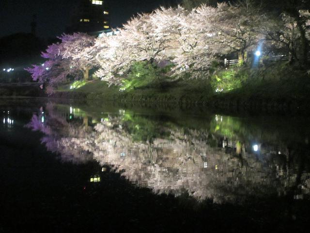 2014 夜桜9