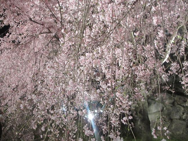 2014 夜桜10