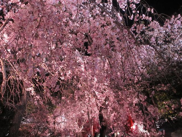 2014 夜桜5