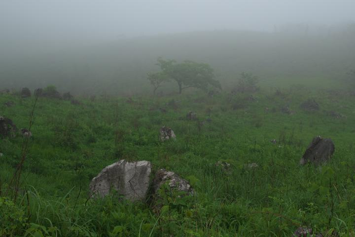 雨上がりの秋吉台1407