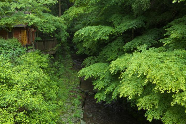 秋芳白糸の滝1401