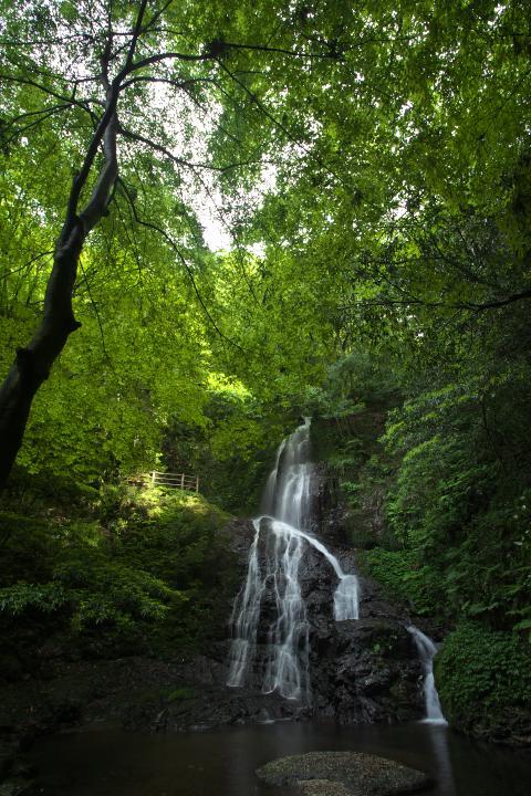 秋芳白糸の滝1403