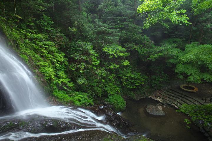 秋芳白糸の滝1406