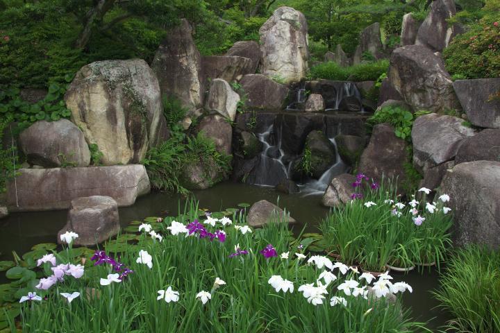 冠山総合公園しょぶ祭り1401