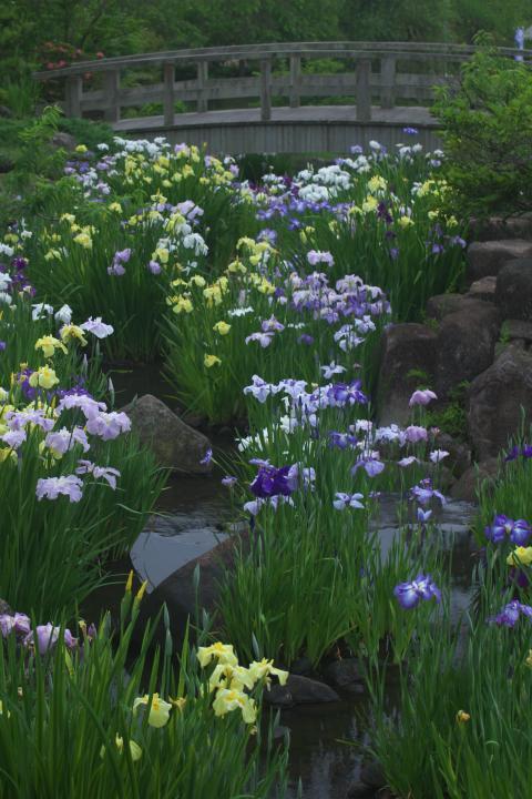 冠山総合公園しょぶ祭り1409