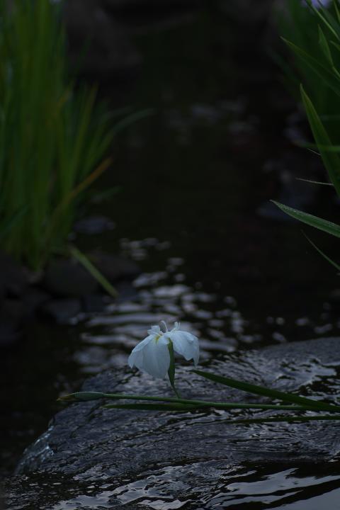 冠山総合公園しょぶ祭り1410
